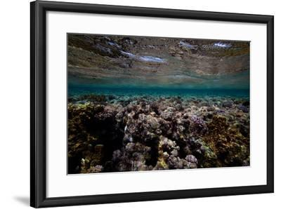 Coral and Other Marine Life in a Fringe Reef on Ant Atoll-Luis Lamar-Framed Photographic Print