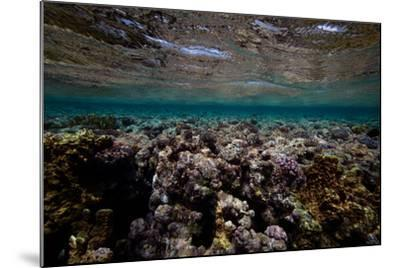 Coral and Other Marine Life in a Fringe Reef on Ant Atoll-Luis Lamar-Mounted Photographic Print