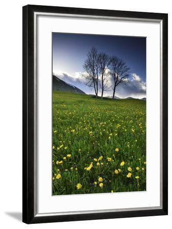 Meadow with Yellow Dandelions, Gap, France-Keith Ladzinski-Framed Photographic Print