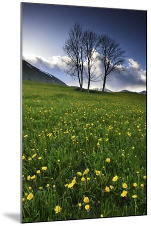 Meadow with Yellow Dandelions, Gap, France-Keith Ladzinski-Mounted Photographic Print