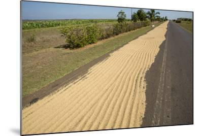 Newly Harvested Rice Dries on a Blacktop Road in a Rural Area-Michael Lewis-Mounted Photographic Print