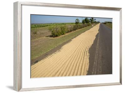 Newly Harvested Rice Dries on a Blacktop Road in a Rural Area-Michael Lewis-Framed Photographic Print