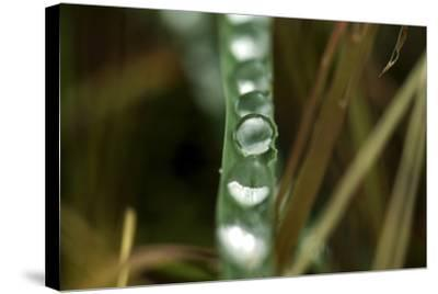 Close Up of Water Droplets on a Leaf-Keith Ladzinski-Stretched Canvas Print