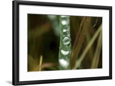 Close Up of Water Droplets on a Leaf-Keith Ladzinski-Framed Photographic Print