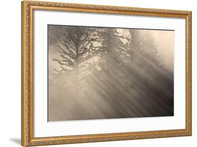 Morning Rays Shine Through the Mist and Spruce and Hemlock Trees Tongass National Forest-Design Pics Inc-Framed Photographic Print