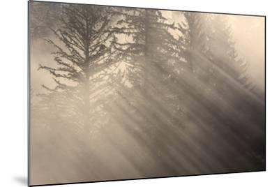 Morning Rays Shine Through the Mist and Spruce and Hemlock Trees Tongass National Forest-Design Pics Inc-Mounted Photographic Print