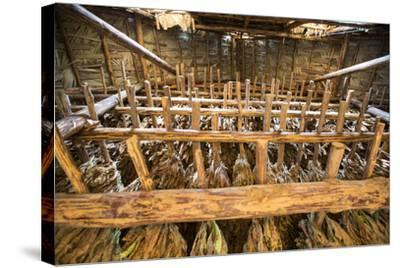 Tobacco Hanging in a Shed to Dry in the Best-Known Growing Region of Cuba, Pinar Del Rio-Michael Lewis-Stretched Canvas Print