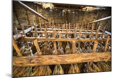 Tobacco Hanging in a Shed to Dry in the Best-Known Growing Region of Cuba, Pinar Del Rio-Michael Lewis-Mounted Photographic Print