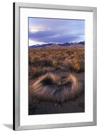 Scrub with Dunes and Mountains in the Distance, Great Sand Dunes National Park-Keith Ladzinski-Framed Photographic Print