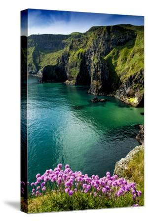 Sea Pinks at Carrick-A-Rede on the North Coast of Northern Ireland-Chris Hill-Stretched Canvas Print