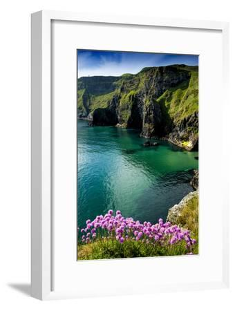 Sea Pinks at Carrick-A-Rede on the North Coast of Northern Ireland-Chris Hill-Framed Photographic Print