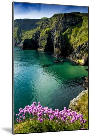 Sea Pinks at Carrick-A-Rede on the North Coast of Northern Ireland-Chris Hill-Mounted Photographic Print