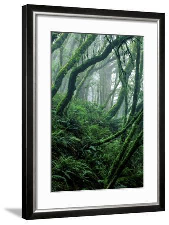 Moss-Covered Tree Trunks and Ferns in Muir Woods National Monument, California-Keith Ladzinski-Framed Photographic Print