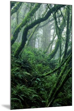 Moss-Covered Tree Trunks and Ferns in Muir Woods National Monument, California-Keith Ladzinski-Mounted Photographic Print
