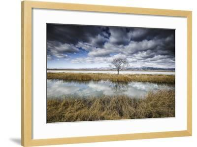 Lone Tree Reflected in Water Near Del Norte, Colorado-Keith Ladzinski-Framed Photographic Print