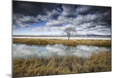Lone Tree Reflected in Water Near Del Norte, Colorado-Keith Ladzinski-Mounted Photographic Print