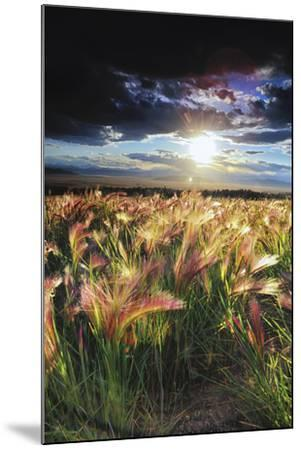 Grasses Blowing in the Wind, South Park, Colorado-Keith Ladzinski-Mounted Photographic Print