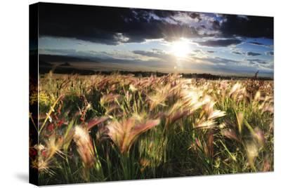 Grasses Blowing in the Wind, South Park, Colorado-Keith Ladzinski-Stretched Canvas Print