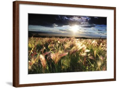 Grasses Blowing in the Wind, South Park, Colorado-Keith Ladzinski-Framed Photographic Print