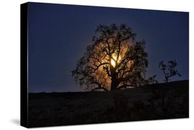 Moonrise and Tree Silhouette, Big Sur, California-Keith Ladzinski-Stretched Canvas Print