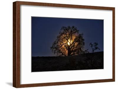 Moonrise and Tree Silhouette, Big Sur, California-Keith Ladzinski-Framed Photographic Print