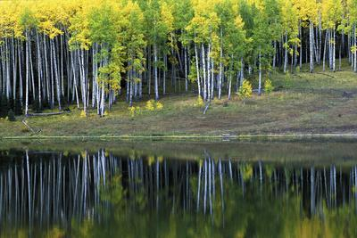 Aspens and their Reflections in Silver Jack Reservoir-Keith Ladzinski-Framed Photographic Print