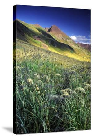 Setting Sun Light and Grass on the Backside of the Maroon Bells Mountains-Keith Ladzinski-Stretched Canvas Print