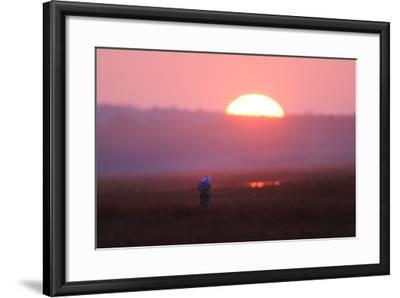A Snowy Owl, Bubo Scandiacus, Perches on a Stump in a Salt Marsh-Robbie George-Framed Photographic Print