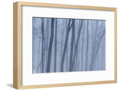 A Grove of Trees in Sleeping Bear Dunes National Lakeshore on the East Side of Lake Michigan-Michael Melford-Framed Photographic Print