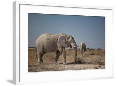 Two Bull Elephants in Etosha National Park, Namibia-Alex Saberi-Framed Photographic Print