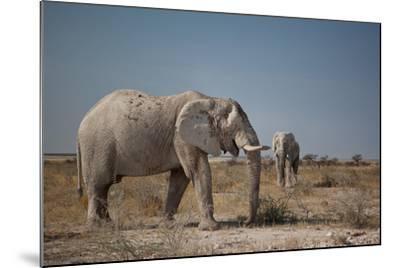 Two Bull Elephants in Etosha National Park, Namibia-Alex Saberi-Mounted Photographic Print