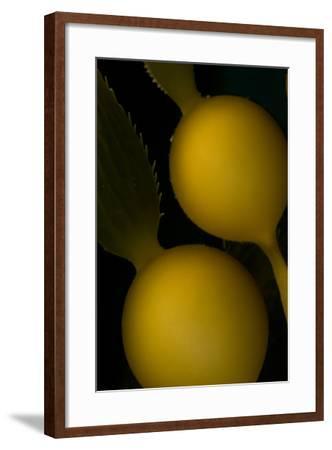 A Kelp Stem-Cesare Naldi-Framed Photographic Print