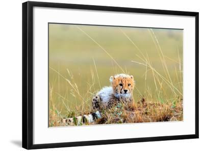 An African Cheetah Cub Resting Near its Mother's Tail-Babak Tafreshi-Framed Photographic Print