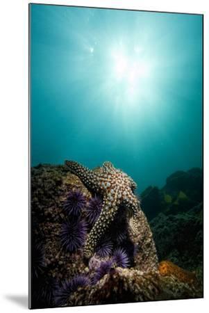 A Sea Star-Cesare Naldi-Mounted Photographic Print