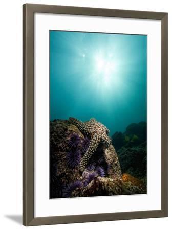 A Sea Star-Cesare Naldi-Framed Photographic Print