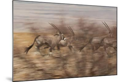 A Group of Oryx on the Run in Namib-Naukluft National Park-Alex Saberi-Mounted Photographic Print