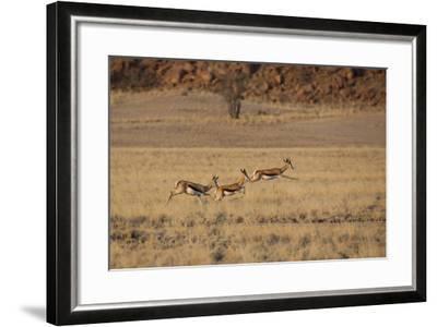 Three Springbok on the Run in Namib-Naukluft National Park-Alex Saberi-Framed Photographic Print