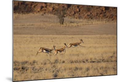 Three Springbok on the Run in Namib-Naukluft National Park-Alex Saberi-Mounted Photographic Print
