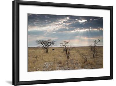 An Ostrich at Sunrise in Etosha National Park-Alex Saberi-Framed Photographic Print