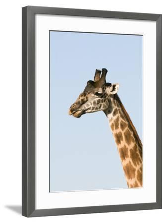 Portrait of a Male Maasai Giraffe, Giraffa Camelopardalis Tippelskirchi-Sergio Pitamitz-Framed Photographic Print