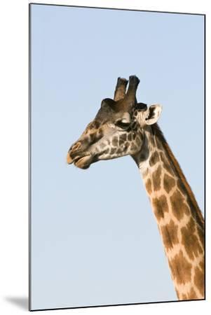 Portrait of a Male Maasai Giraffe, Giraffa Camelopardalis Tippelskirchi-Sergio Pitamitz-Mounted Photographic Print