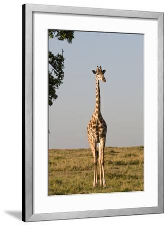Portrait of a Female Maasai Giraffe, Giraffa Camelopardalis Tippelskirchi-Sergio Pitamitz-Framed Photographic Print