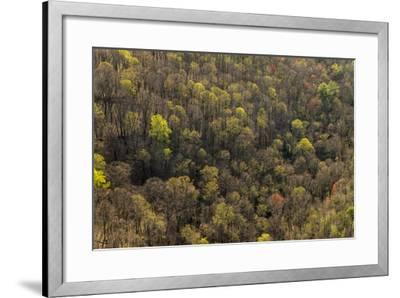 The Bald River Proposed Wilderness in Tennessee's Cherokee National Forest-Michael Melford-Framed Photographic Print