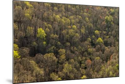 The Bald River Proposed Wilderness in Tennessee's Cherokee National Forest-Michael Melford-Mounted Photographic Print