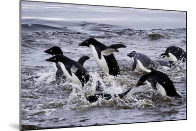 Adelie Penguins on Devil's Island in the Weddell Sea of Antarctica-Jim Richardson-Mounted Photographic Print