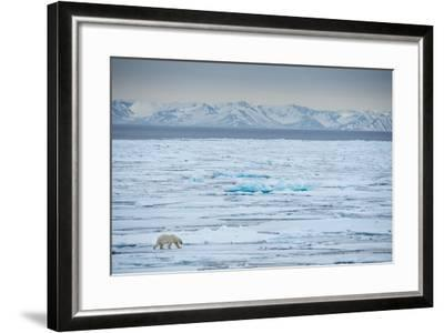 A Lone Polar Bear Traverses the Pack Ice on Hinlopen Strait-Michael Melford-Framed Photographic Print