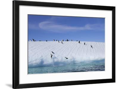 Adelie Penguins on a Frozen Slope-Jim Richardson-Framed Photographic Print