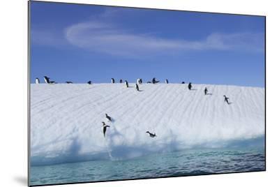 Adelie Penguins on a Frozen Slope-Jim Richardson-Mounted Photographic Print