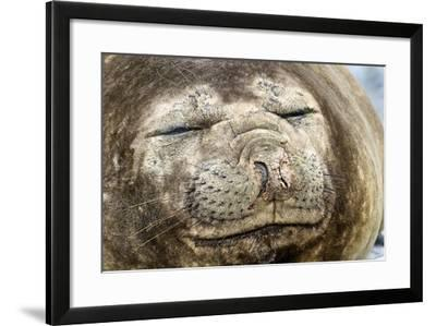 A Seal Sleeps at Palmer Station-Jim Richardson-Framed Photographic Print