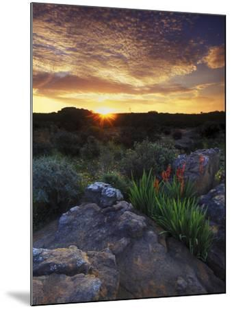 Wildflowers and Sunset at Cederberg Wilderness Area, South Africa-Keith Ladzinski-Mounted Photographic Print